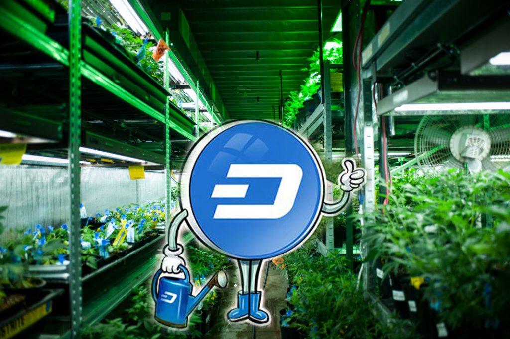 DASH решит проблемы денежных платежей на рынке Каннабиса